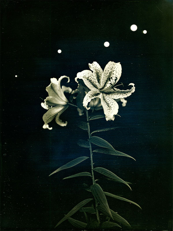 """Radioactive Lilies, Iitate village. July 26, 2011. From the series """"Here and There: Tomorrows' Islands"""" © Takashi Arai"""