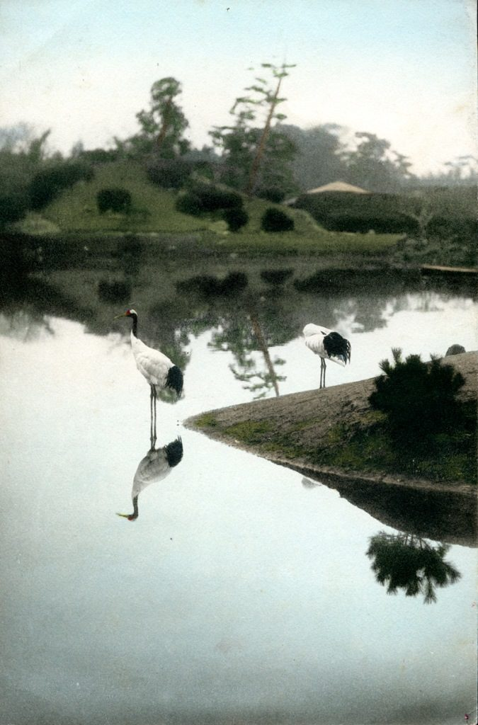 Fig. 4. Storks at Okayama Park. Shashin Print by Kōzaburō Tamamura, c. 1890 | © National Trust for Scotland, Broughton House and Garden